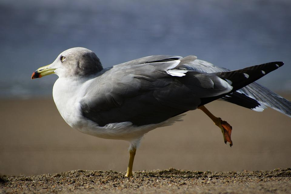 Animal, Sea, Beach, Wave, Seabird, Sea Gull, Seagull