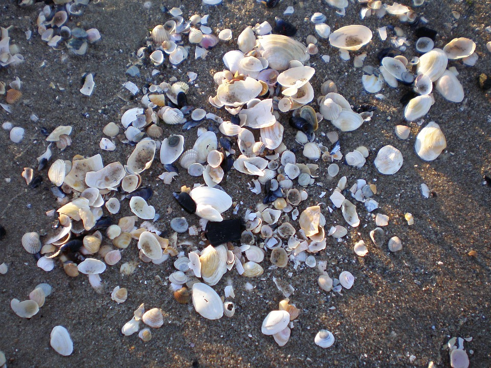 Mussels, Baltic Sea, Island Of Usedom, Sea, Beach