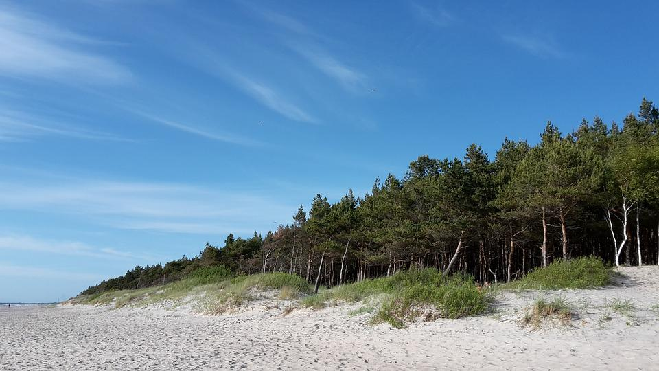 Sea, Beach, Baltika, Palanga, Lithuania, Pine, Sky