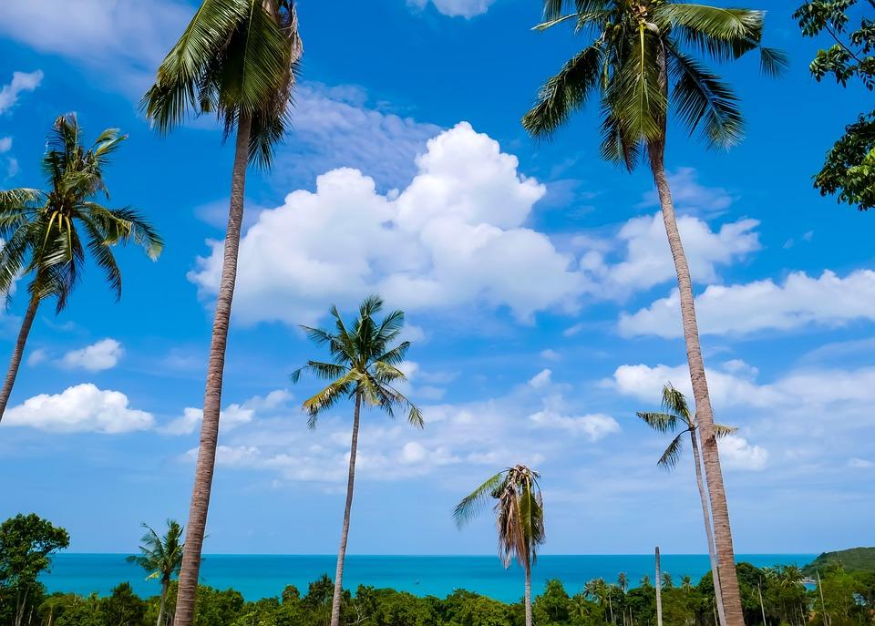 Koh Samui, Beach, Sea, Trees, Clouds, Blue Sky