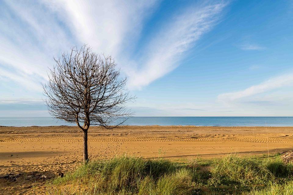 Sea, Tree, Beach
