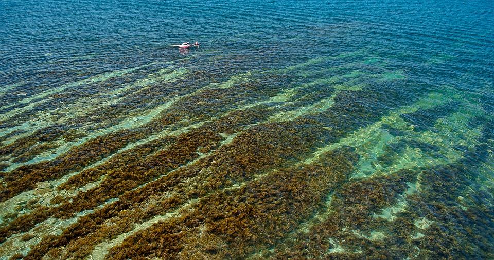 Sea, Water, Sea bottom, Weed, Black Sea, Marine