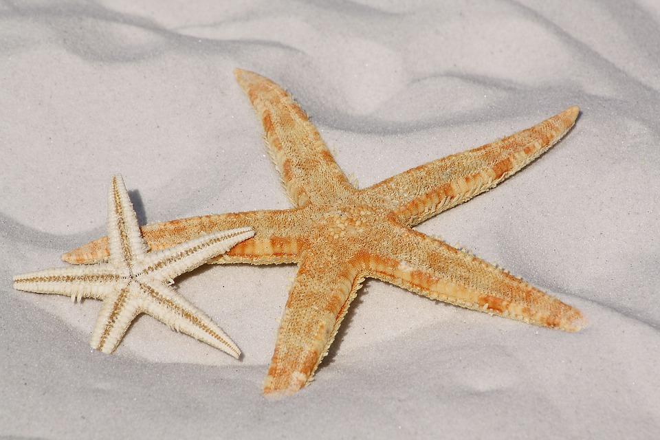 Starfish, Sand, Beach, Sea, Water, Lake, Bodnar, Bank