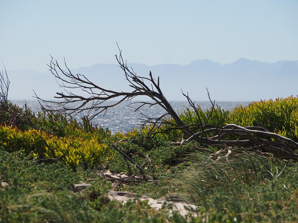 Nature, Branch, Wood, Sea, Beach, Botany, Branches