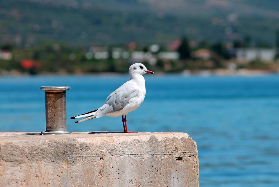 Port, Seagull, Winged, Sea, Beach, Mood, Calm, Nature