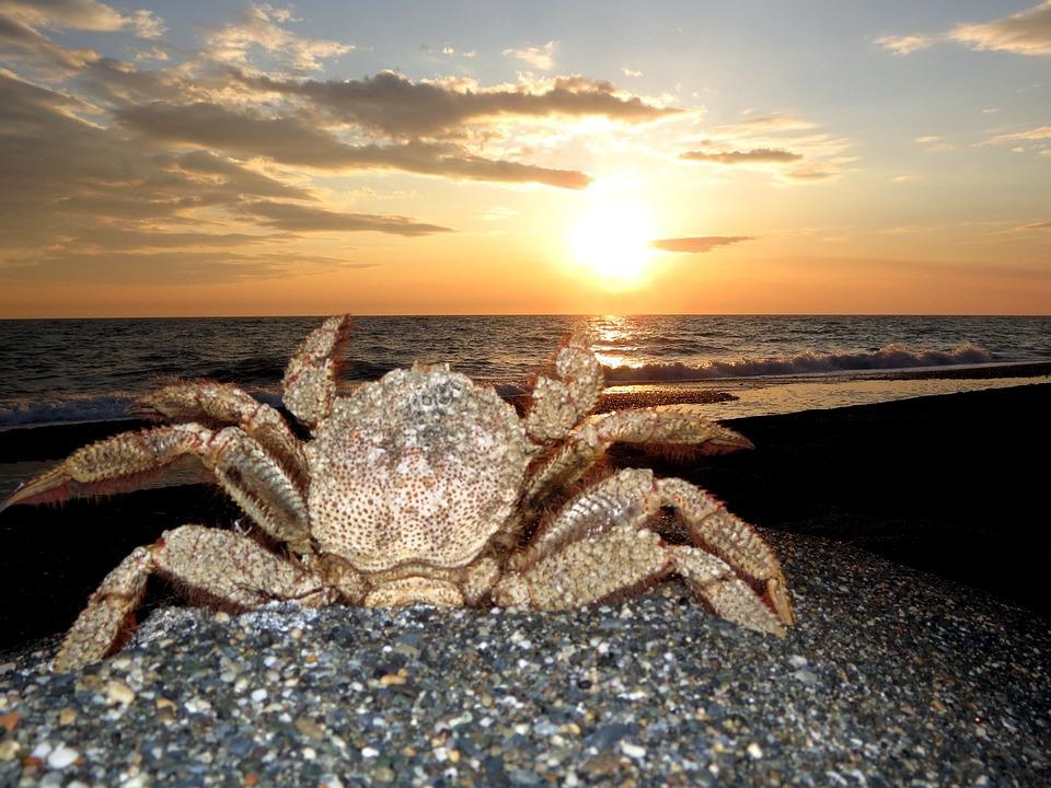 Crab, Hairball, Kamchatka, Strigun, Sea, Beach, Coast