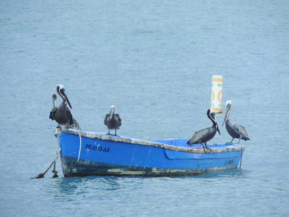 Pelican, Sea, Nature, Water, Coast, Bird, Boat
