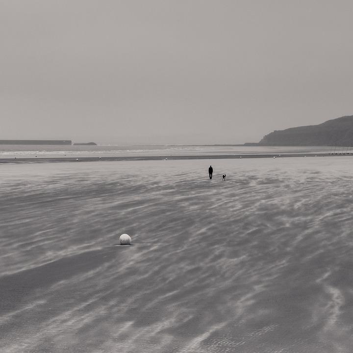 Beach, Go Walkies, Dog, Relaxation, Coast, Sea, Ocean