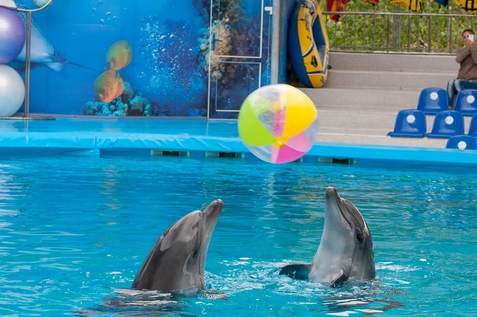 Dolphin, Dolphinarium, Sea