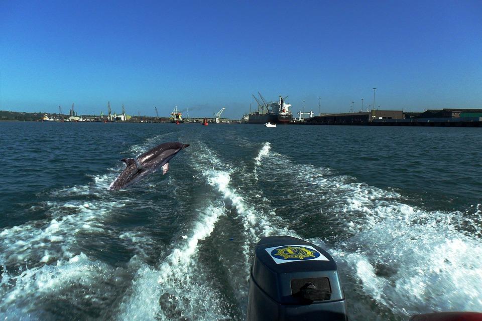 Dolphins, Durban, Sea