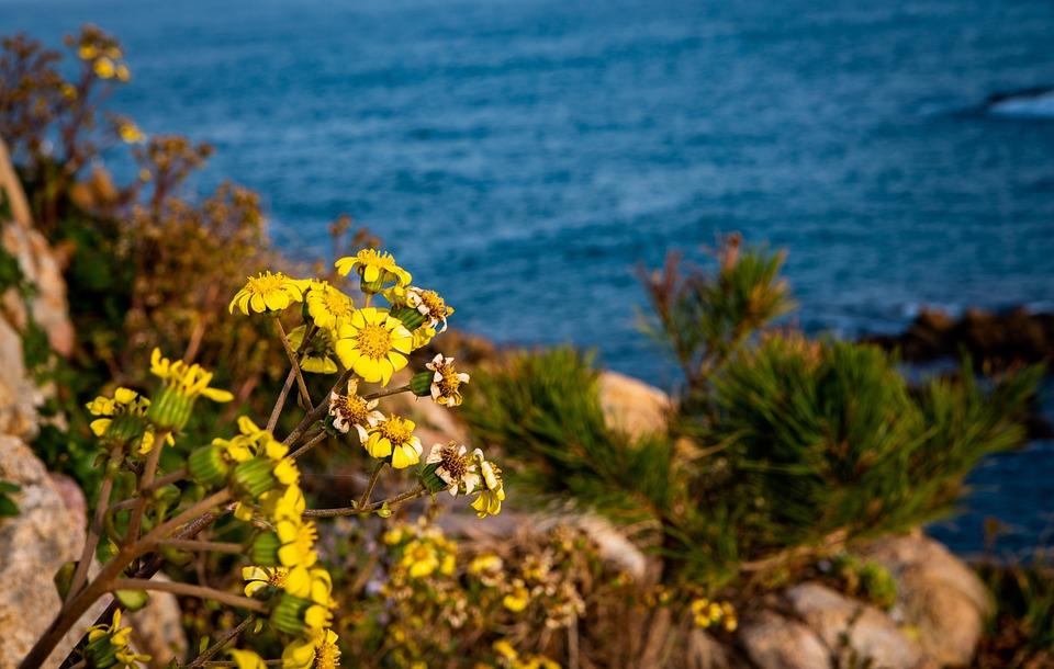 Flowers, Sea, Nature, Background, Desktop