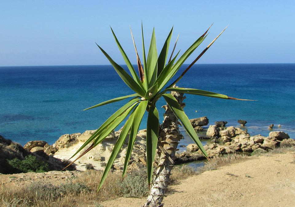 Palm Tree, Garden, Sea, Horizon, Cyprus