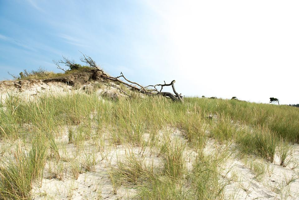 Baltic Sea, Tree, Beach, Sky, Clouds, Grass, Root, Sea