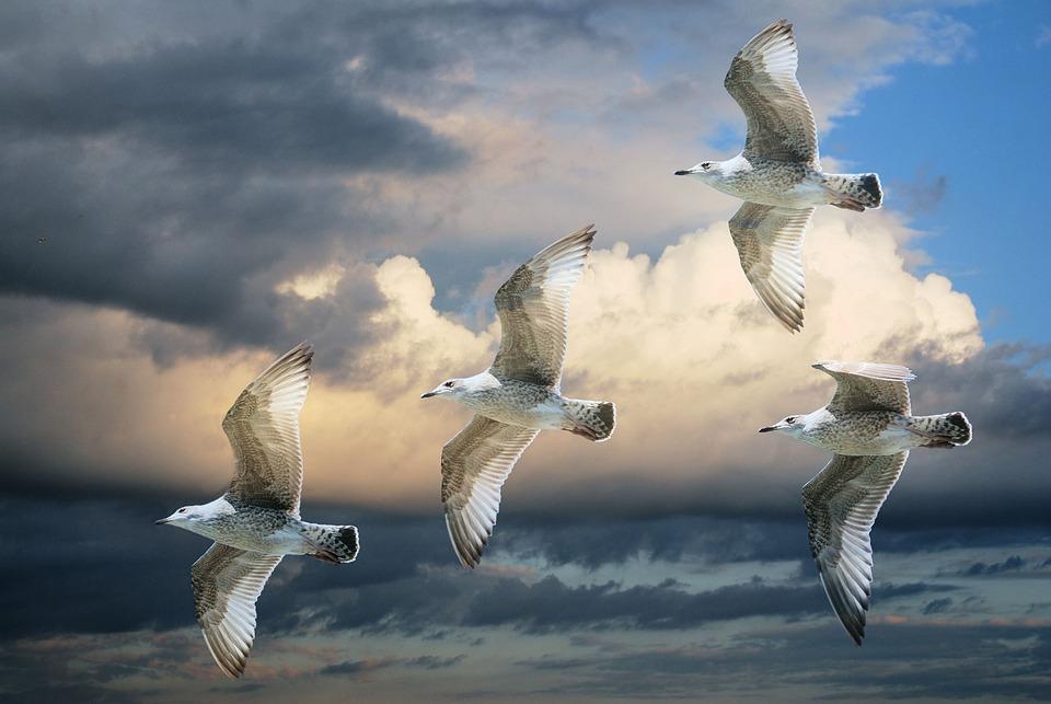 Gull, Sea Gull, Birds, Sky, Clouds, Blue Sky