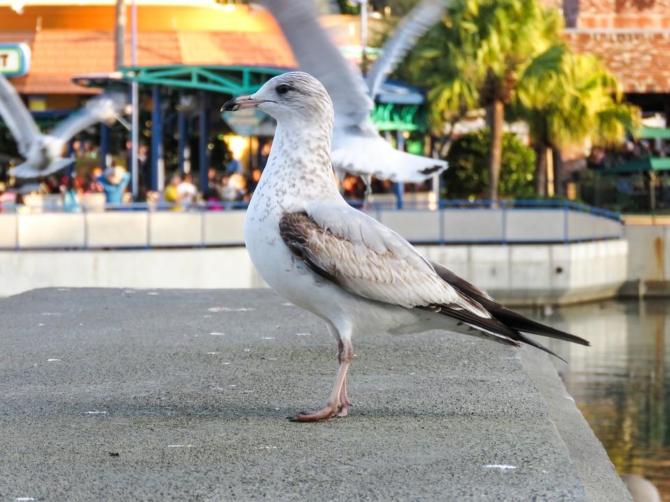 Animal, Bird, Sea, Gull, Wildlife, Side-face, Looking