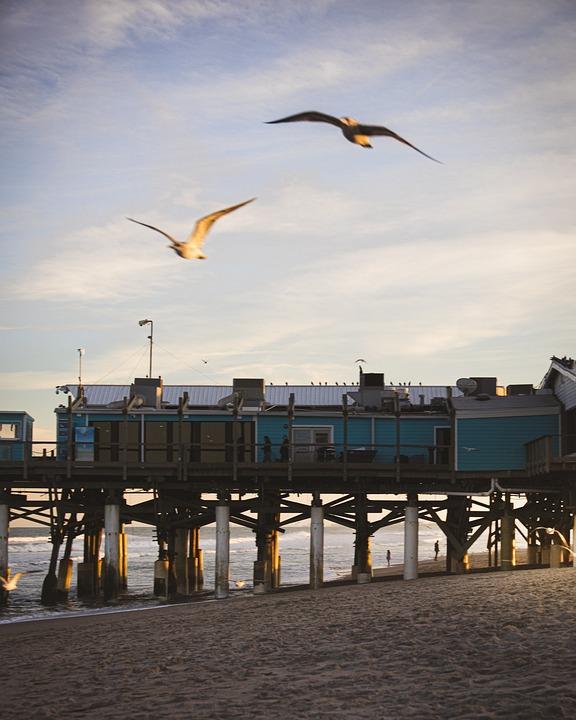 Gulls, Flying, Beach, Birds, Seagulls, Sea, Ocean, Sand
