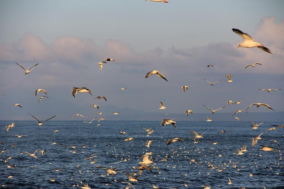Etorofu, Kuriles, Gulls, Sea, Ocean, Sunset