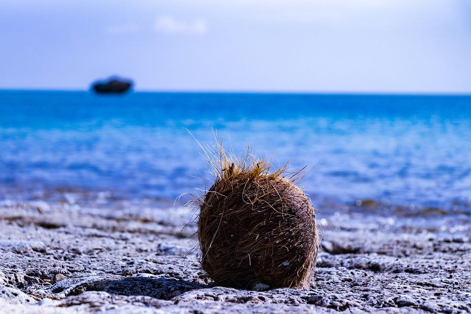 Ishigaki, Okinawa, Coconut, Sea, Landscape, Summer