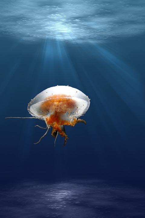 Jellyfish, Tentacles, Animal, Underwater, Sea Jelly