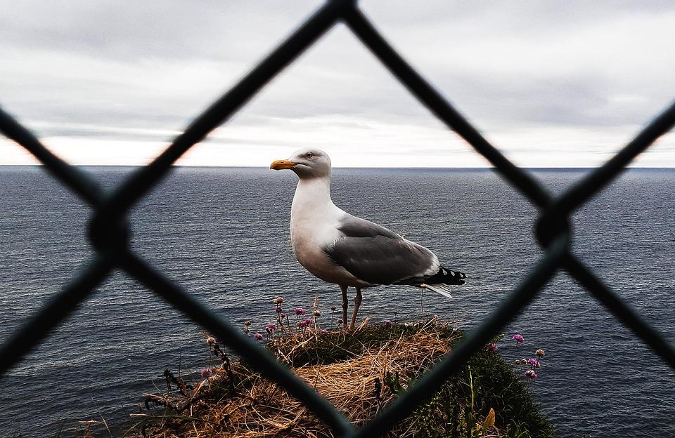 Sea, Bird, On, Land