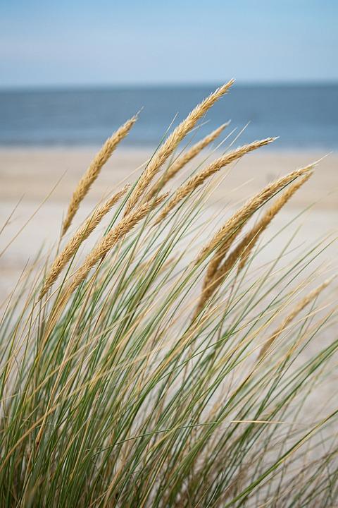 Sea, Grass, Beach, Nature, Landscape, Sand, Travel