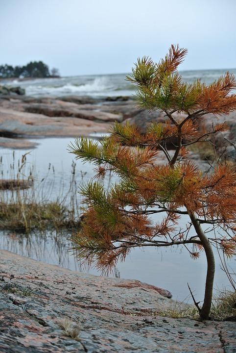 Landscape, Sea, Rock