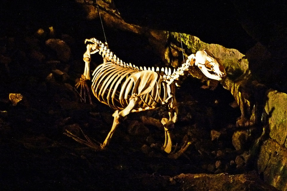 Skeleton, Sea Lion, Cave, Rocks, Shoreline, Pacific