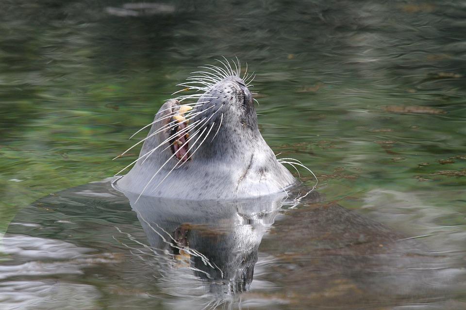 Sea Lion, Head, Water, Wet, Animal World, Animal, Zoo