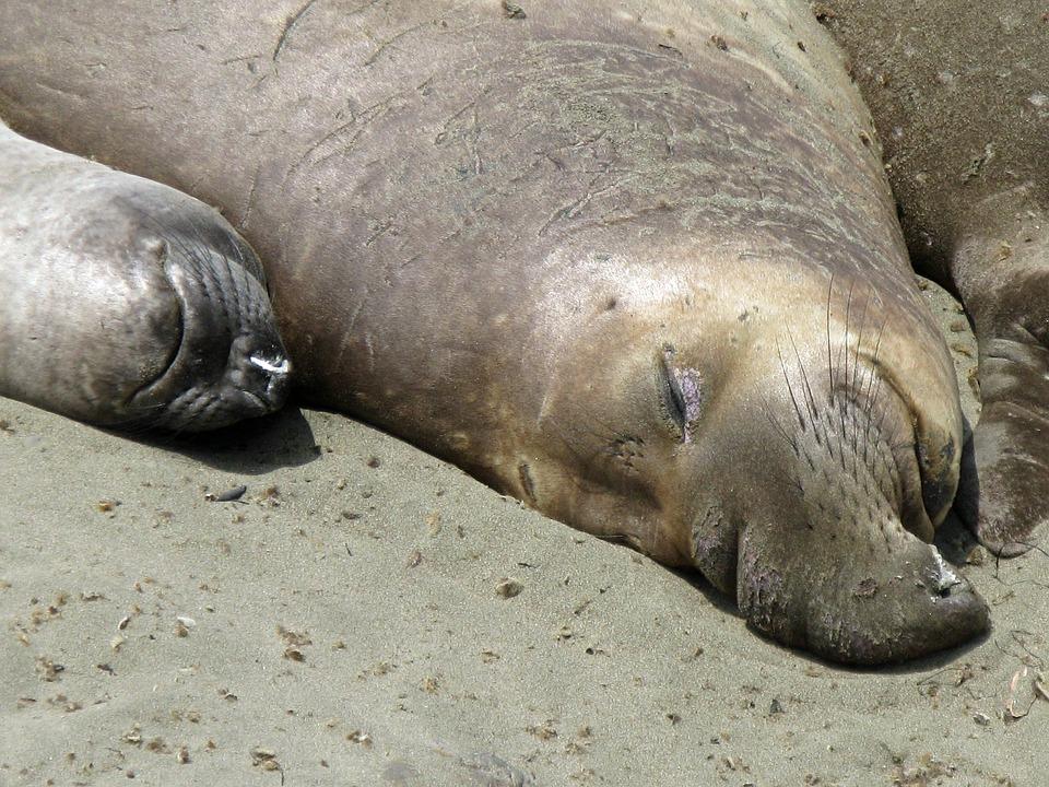 Sea Lions, California, Highwag Nr 1