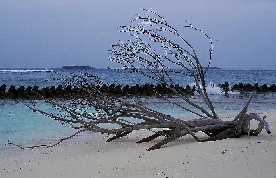 Maldives, Beach, Flotsam, Sea