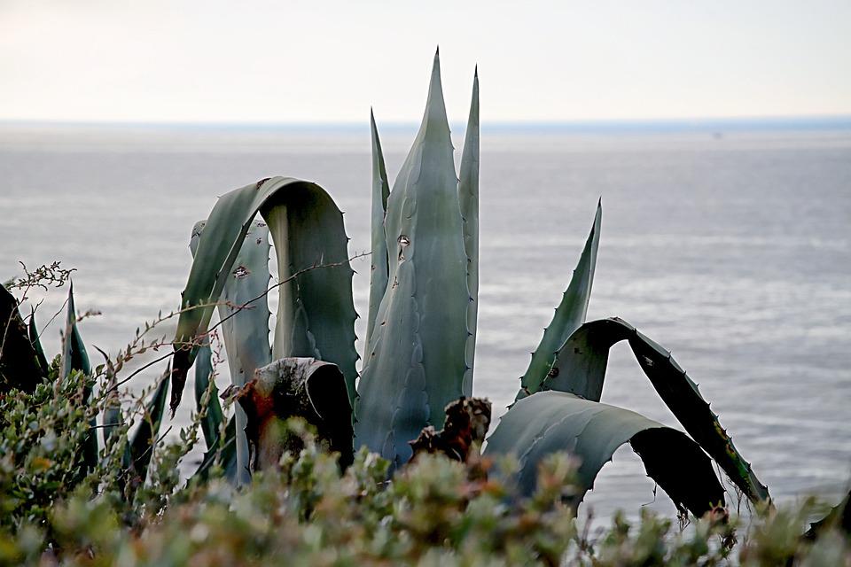 Sea, Landscape, Cactus, Mediterranean Sea, Aloe Vera