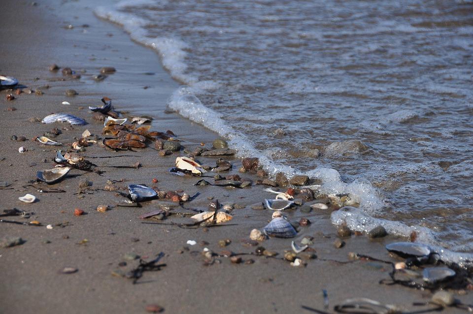 Beach, Sea, New Brunswick, Canada