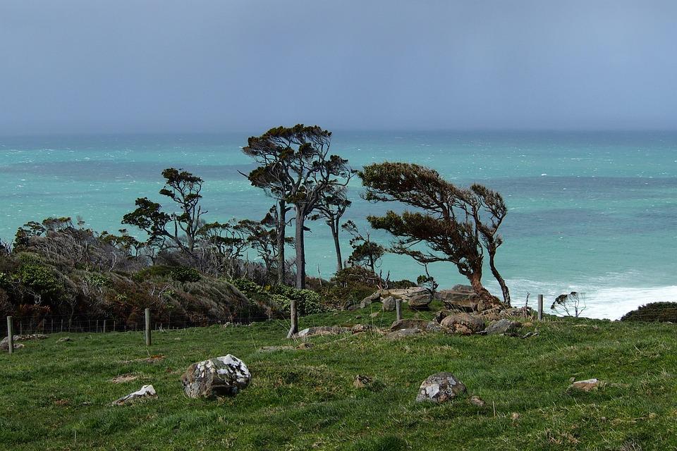 New Zealand, Trees, Wind, Sea, Green, Blue