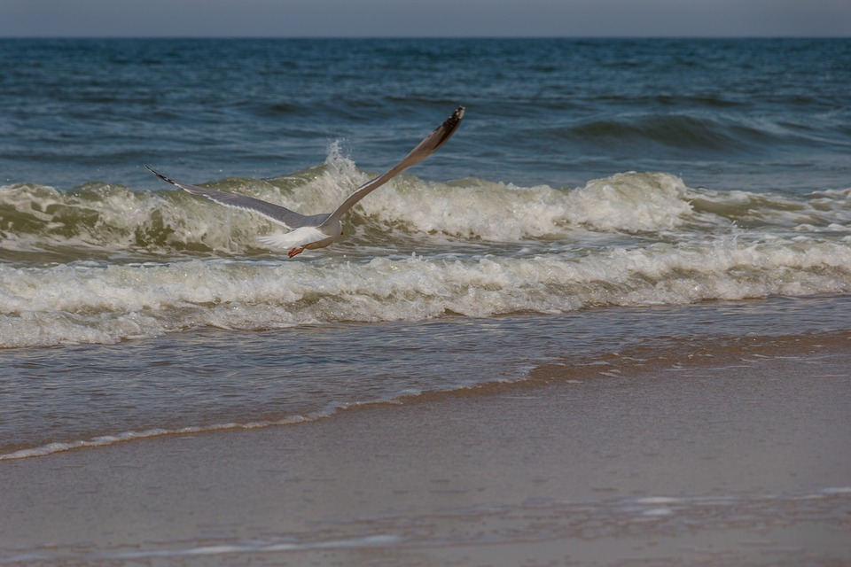 Seagull, North Sea, Sylt, Sky, Coast, Flight, Sea, Bird