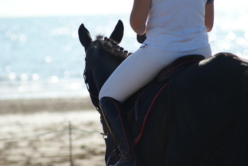 Horse, Beach, Sea, Horseback Riding, Horses, Ocean
