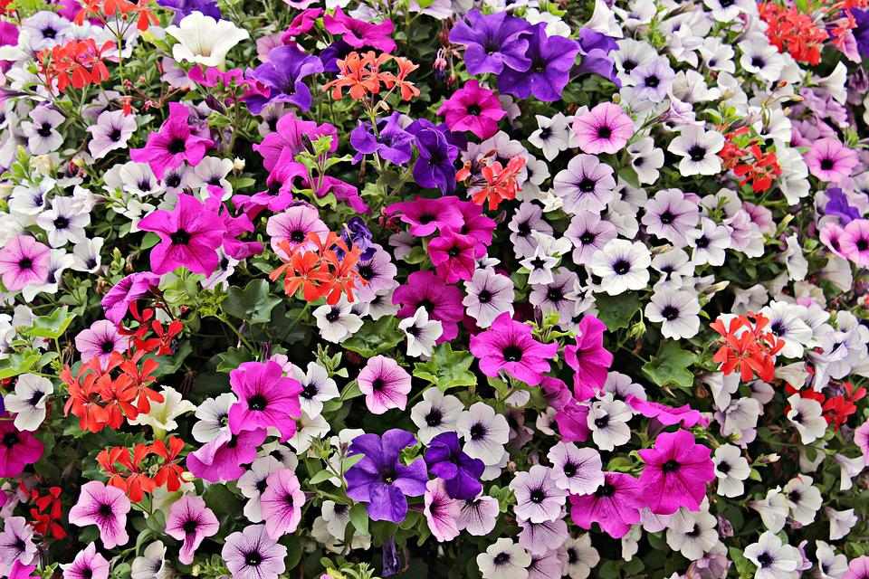 Flowers, Sea Of Flowers, Bloom, Nature, Colorful