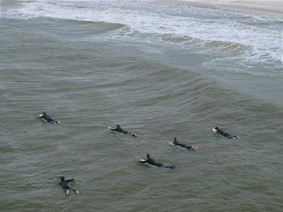 Water, Sea, Nature, Ocean, Bird, Wave, Outdoors, Surf