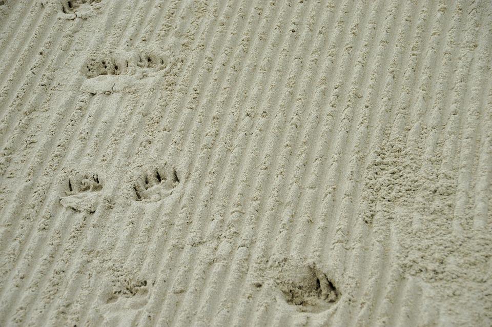 Sea, Beach, Stella Beach, Hauts De France, Resort, Cucq