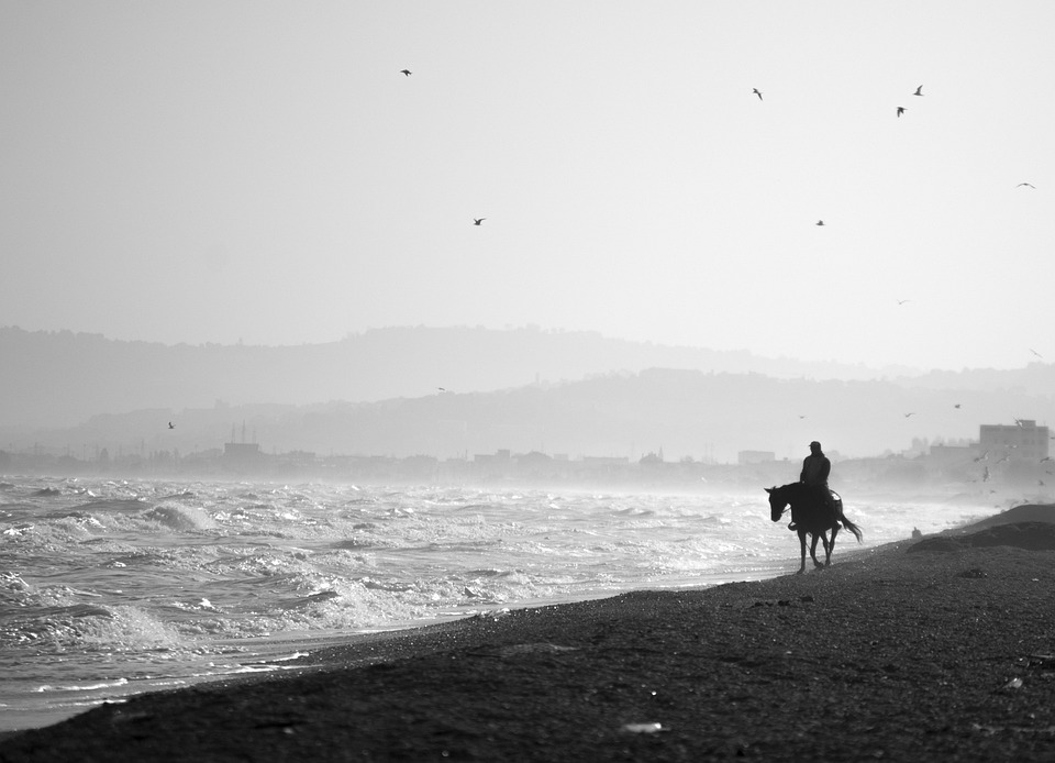 Horse, Beach, White Black, Sea, Profile, Ride