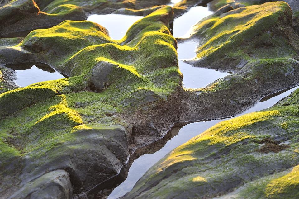 Seaweed, Rock, Coast, Water, Sea