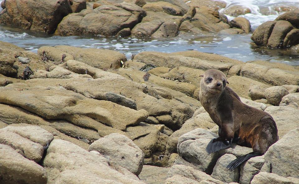 Seal, Sea, Beach, Rockery
