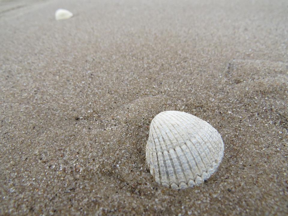 Sand, Shell, Sea, Beach, Seashell, Excerpt Of The Beach