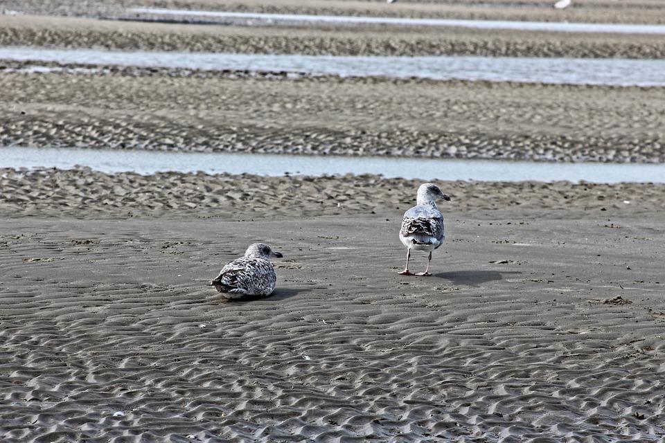 Sea, Beach, Seagulls, Sand, Summer, Belgium