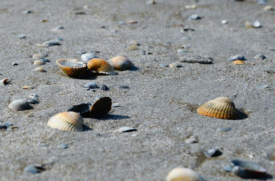 Shell, Beach, Sand, Sea, Summer, Vacation, Travel