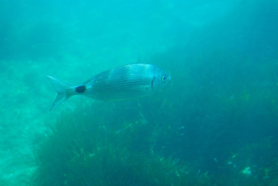 Diving, Seabed, Fish, Sea, Spain