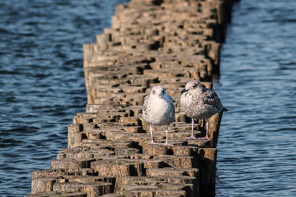 Seagull, Bird, Sea, Group, Seevogel, Nature