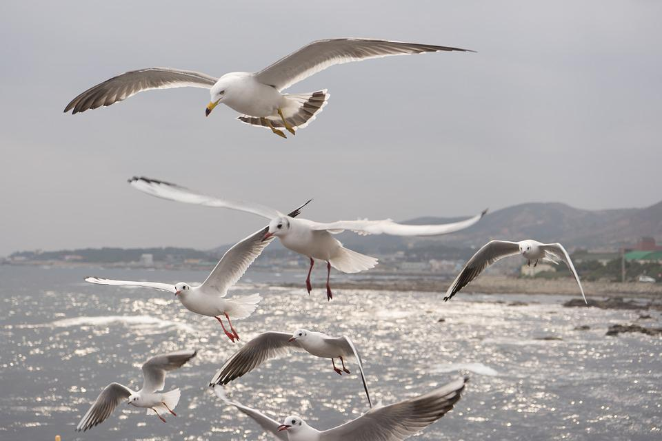 Seagull, Sea, Birds, Flight, Wing, Freedom, Water