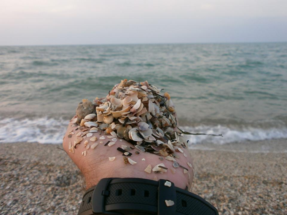 Sea, Hand, Sand, Beach, Seashells