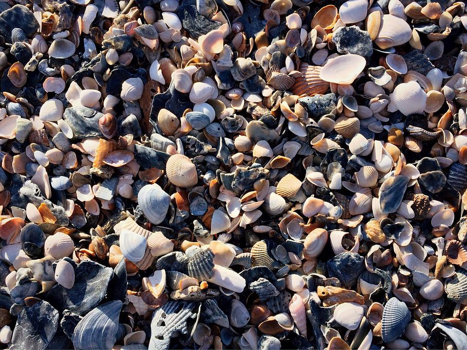 Beach, Shells, Sand, Sea, Ocean, Sea Shells