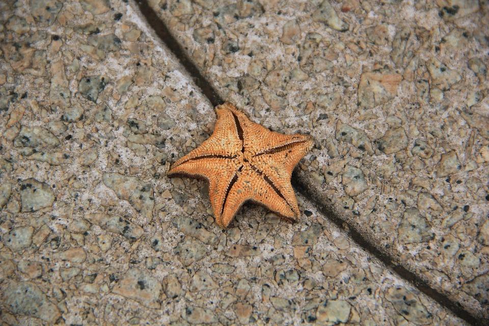 Starfish, Sea Star, Colorful, Dried, Echinoderm